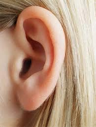 ผลการค้นหารูปภาพสำหรับ ติ่งหู