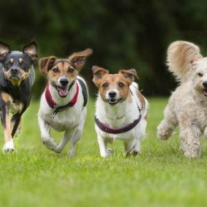 ชุดพ่นหมอกสำหรับ ฟาร์มหมา ฟาร์มสุนัข ลดความร้อน ระบายความร้อนให้หมา