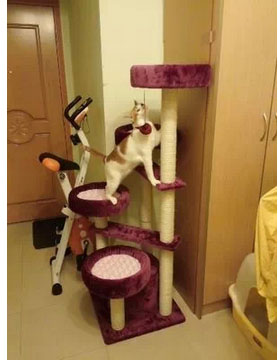 MU0080 คอนโดแมวสี่ชั้น ต้นไม้แมว มีบ้านอุโมงค์เบันได กระบะนอน ของเล่นแขวน สูง 152 cm