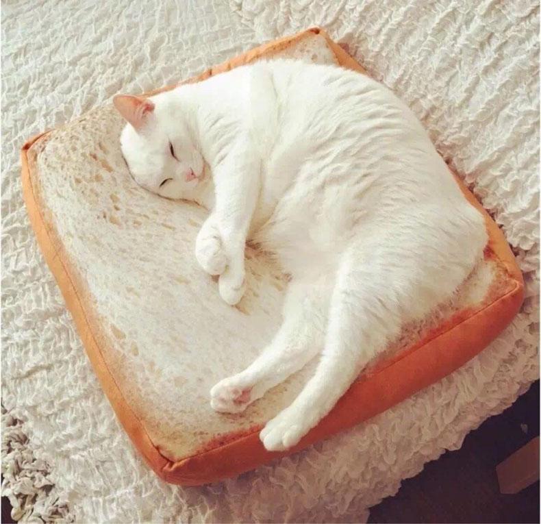 ที่นอนขนมปัง Sandwich Mat For Cat - Dog
