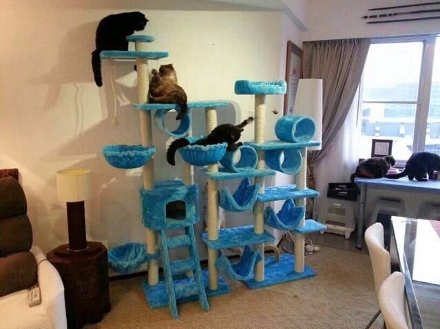 MU0065 คอนโดแมวแปดชั้น ขนาดใหญ่ ต้นไม้แมว มีบ้านอุโมงค์ เปลนอน กระบะนอน ของเล่นแขวน สูง 240-260 cm