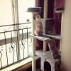 MU0068 คอนโดแมวหกชั้น ขนาดใหญ่ ต้นไม้แมว มีบ้านอุโมงค์สองชั้น ของเล่นแขวน บันได สูง 180 cm