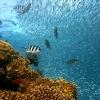 3 ทริปท่องเที่ยว สัมผัสธรรมชาติประทับใจด้วยการดำน้ำ
