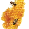 กลิ่น Honey Fragrance (น้ำผึ้ง) 1kg