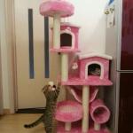 MU0062 คอนโดแมวสี่ชั้น ขนาดใหญ่ ต้นไม้แมว มีบ้านอุโมงค์สองชั้น เปลนอน กระบะนอน ของเล่นแขวน สูง 155 cm