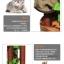 MU0117 คอนโดแมวขนาดใหญ่หกชั้น ต้นไม้แมว กระบะนอน ของเล่นแขวน มีเถาวัลย์ใบไม้พันรอบต้นไม้ เหมือนปีนบนต้นไม้ในป่า สูง 190 cm thumbnail 9