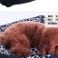 MU0129 ที่นอน เบาะนอนสำหรับสัตว์เลี้ยง เบาะนอนหมา แมว ตัวเบาะและเนื้อผ้านุ่มสบาย น่าสัมผัส ขนาด 55 x 45 cm : 4.2 kg. thumbnail 4