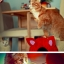 กล่องที่นอนแมวและที่ลับเล็บแมว รูปทรงน่ารัก thumbnail 7