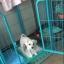 กรงรั้วสำหรับสุนัขและกระต่ายเลี้ยงในร่ม มีหลายสี หลายไซส์ thumbnail 10