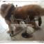 รถเข็นสำหรับสัตว์พิการ วีลแชร์หมา วีลแชร์แมว วีลแชร์สำหรับสัตว์เลี้ยงอายุมาก ขนาดเล็ก สำหรับน้ำหนัก 2-4 KG แบบ 4 ล้อ thumbnail 1