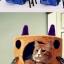 กล่องที่นอนแมวและที่ลับเล็บแมว รูปทรงน่ารัก thumbnail 8
