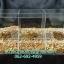 กล่องอครีลิค ใส่อาหารนกแบบ 3 ช่อง thumbnail 2