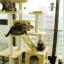 MU0061 คอนโดแมวเจ็ดชั้น ขนาดใหญ่ ต้นไม้แมว มีบ้านอุโมงค์สองชั้น ของเล่นแขวน สูง 180 cm thumbnail 1