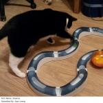 ของเล่นแมว รางงูลูกบอล Catit Design Senses Super Roller Circuit สินค้าพร้อมส่ง