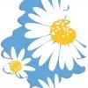 NEW!!! - Daisy Fields กลิ่นดอกเดซี่ หอมเย็นๆ สดชื่น