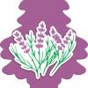 กลิ่น Lavender กลิ่นลาเวนเดอ มาพร้อมกับกลิ่นที่มีเสน่ห์ ให้ความสดชื่นเหมือนอยู่กลางทุ่งดอกไม้